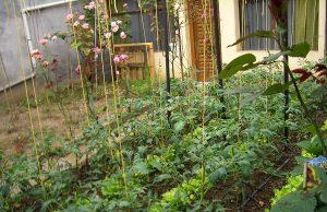 Home Gardening India