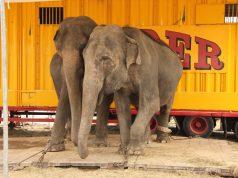 Circus Animals