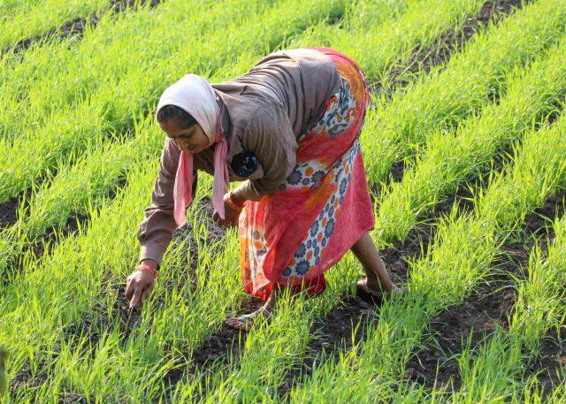 Women farmers of India