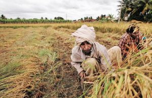 Loan for farmers - MP