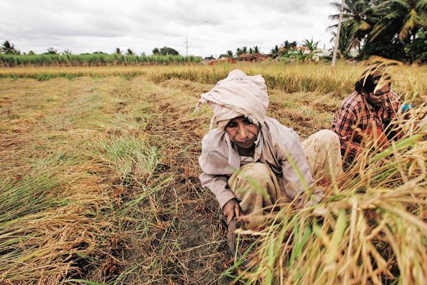 Loan for farmers - MP
