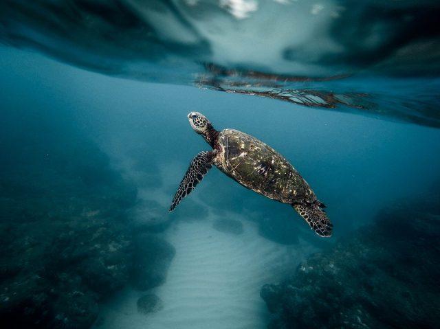 endangered marine life