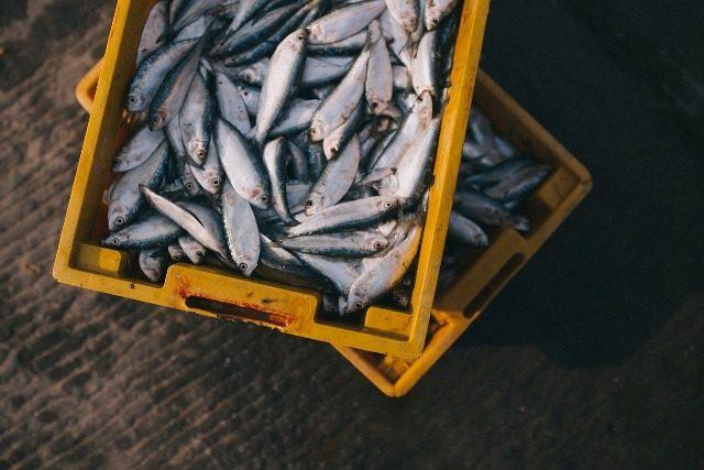 solar dryers for fish
