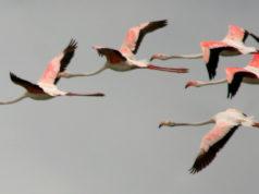 Migratory birds in Kutch
