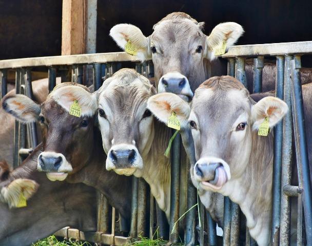 industrial dairy