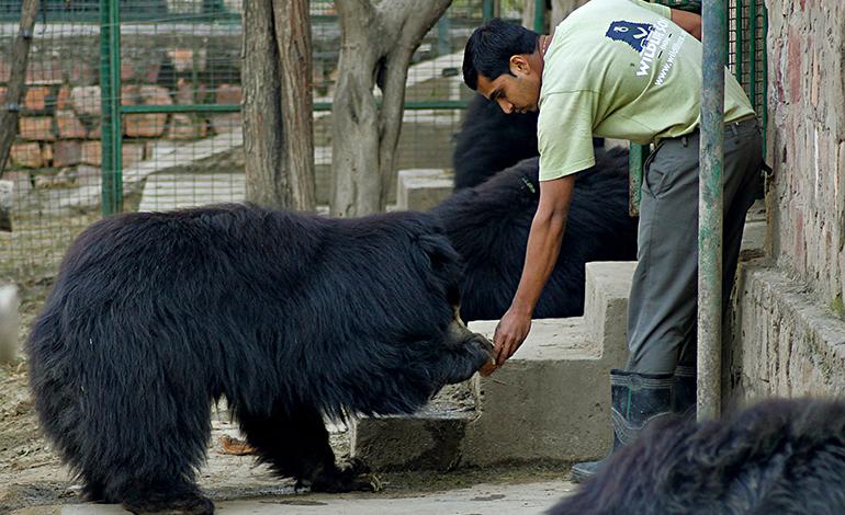 Agra bear rescue