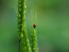 Land sharing or Land Sparing - Biodiversity