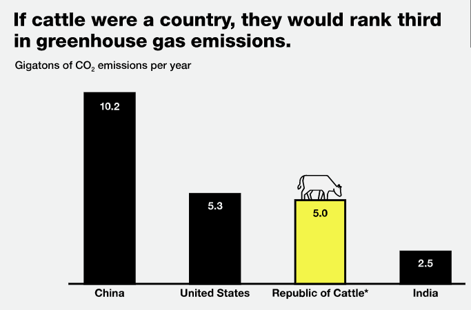 Cattle Greenhouse Emissions