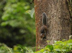 Biodiversity Hotspots in India - Western Ghats
