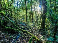 Afforestation Forest
