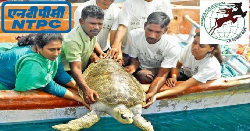 NTPC has a flagship CSR programme to save Olive Ridley Turtles