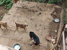 SPACE Foundation animal shelter - Wonderchef CSR
