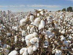 Syngenta CSR for Yavatmal cotton farmers