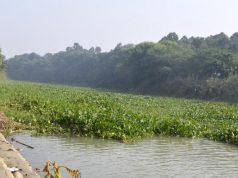 Kanjli wetland in Punjab