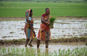 Odisha csr