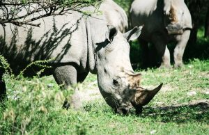 Rhinos - Forevermark CSR project