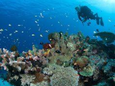 Tata Chemicals Coral Reef
