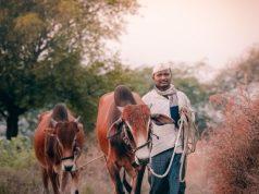 crop production in Maha